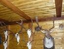 Kartáčovaný obklad lovecké místnosti